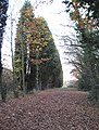 Path to Rayleigh Weir - geograph.org.uk - 623093.jpg