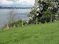 Pathside hawthorn - geograph.org.uk - 1316364.jpg