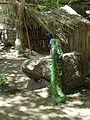 Peacock 111.jpg