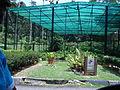Penang Botanic Gardens (30).JPG