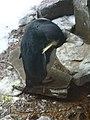 Penguin-Biodome.jpg