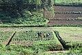 People working in agriculture in Rwanda.jpg