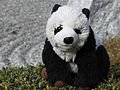 Petit panda au jardin (6970225435).jpg
