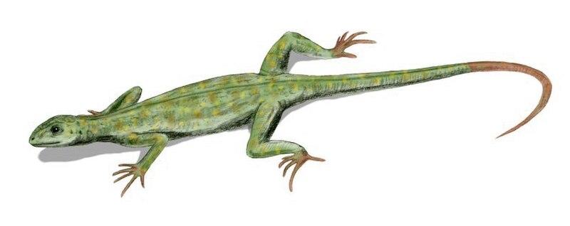 Petrolacosaurus BW