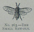 Picture Natural History - No 263 - The Small Saw-fly.png