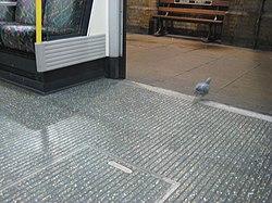 Pigeon at Baker Street tube station.jpg