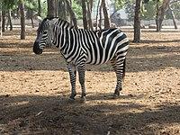 PikiWiki Israel 53067 wildlife animals.jpg