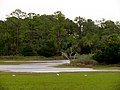 Pinckney Island National Wildlife Refuge (5958490480).jpg