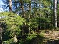 Pine Hills Nature Preserve.png