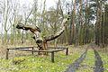 Pinus silvestris, Sosna Krasińskiego, Wierzenica.JPG