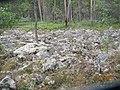 Pirunpelto Arppe Memorial Forest.jpg