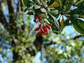 Plant in Georgia.jpg