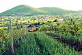 Plantacion ne Bresalc Gjilan Kosovë.JPG