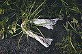 Plasticulture på Toten 02-09-19.jpg