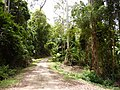 Plum Pudding Rd, Sherwood Forest - panoramio.jpg