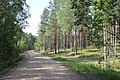 Plyussky District, Pskov Oblast, Russia - panoramio (1).jpg