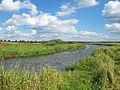 Podlaskie - Narew - Ancuty;Narew - rz Narew 20110910 01.JPG