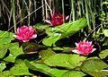 Pond flowers (4650823261).jpg