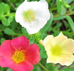 Jardín botánico subtropical de Nagasaki