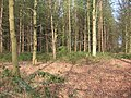 Potterscrouch Plantations - geograph.org.uk - 1259.jpg