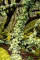 Powdered Ruffle Lichen (982620239).jpg