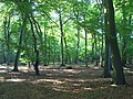 Poynatts Wood, Turville - geograph.org.uk - 995742.jpg