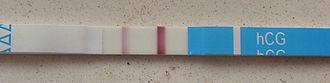 HCG pregnancy strip test - Pregnancy test strip