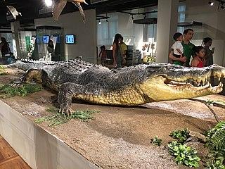 Crocodile skin Skin of a live crocodile or a leather made from dead crocodile hide