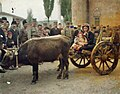 Pristina-Gracanica Busha cattle, Serbian soldiers and villagers 1913.jpg
