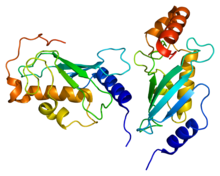 Protein UBE2N PDB 1j7d.png