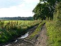 Public Bridleway near Frisby, Leicestershire - geograph.org.uk - 501057.jpg