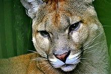 site de cougars grisons