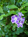Purpleflowers7.jpg