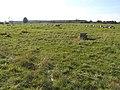 Quizzical Sheep - geograph.org.uk - 590669.jpg