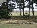 Rådyr ved Mosevrå nord for Ho Bugt.jpg