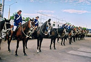 Bay (horse) - The horses of the New South Wales Mounted Police show some of the typical variations in the bay color.