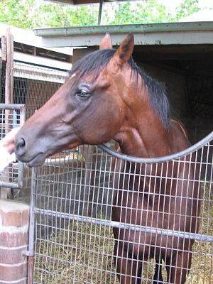 Sirmione (horse) - Sirmione