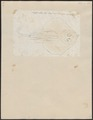 Raja clavata - 1700-1880 - Print - Iconographia Zoologica - Special Collections University of Amsterdam - UBA01 IZ14200061.tif