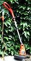 Rasentrimmer String trimmer DSCF0001.JPG