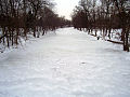 Red Cedar frozen over.jpg