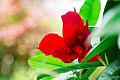 Red Flower in Autumn.jpg