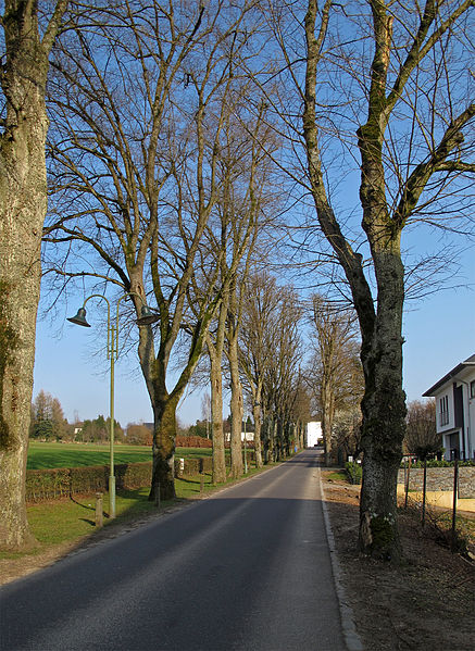 Alley of limetrees in Redange, Luxembourg, (Allée des Tilleuls)