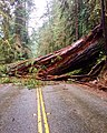 Redwood Closes Road.jpg