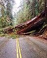 Redwood Closes Road.jpg