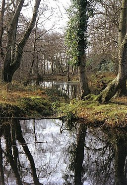 Reflections at Steamer Point nature reserve - geograph.org.uk - 506531