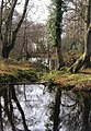 Reflections at Steamer Point nature reserve - geograph.org.uk - 506531.jpg