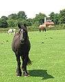 Rescued horses on Hapton Estate - geograph.org.uk - 1385774.jpg