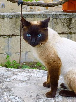 Respalditza (Ayala-Aiara) . gato