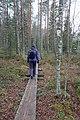 Retkeilijä Kaksvetisen rannan pitkospuilla, Liesjärven kansallispuisto, Tammela, 15.11.2014 (2).JPG