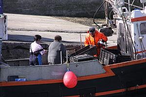 Retour de la pêche à la seiche du fileyeur Jason IV (11).JPG